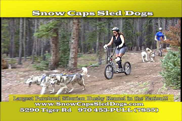 Snow Cap Sled Dogs